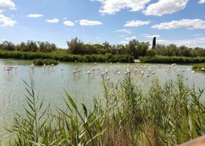 Bird park Parc ornithologique du Pont de Gau